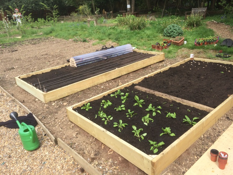 Building Garden Beds From Pallets